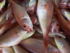 Πως να ξεχωρίσετε τα φρέσκα από τα μπαγιάτικα ψάρια